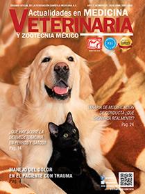 portada21_b