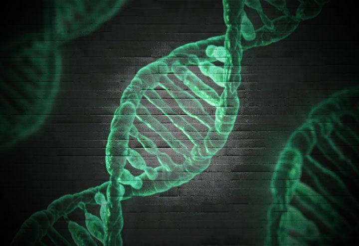 Cromosomas  y mutaciones  ¿Aceptas el reto?