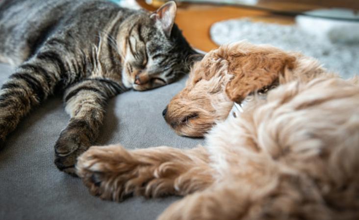 Conceptos de la ventilación mecánica en perros y gatos