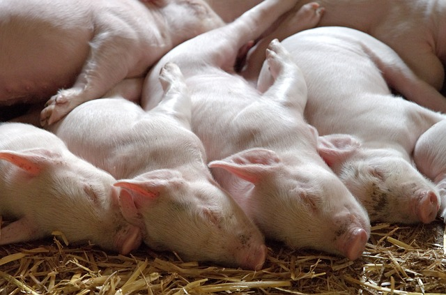México en el top ten de exportadores de carne a nivel mundial