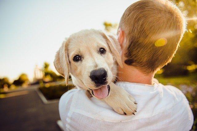 Pandemia impulsa venta de alimento para mascotas; 7 de cada 10 hogares tienen una